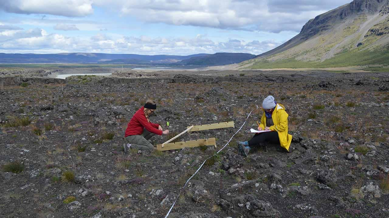 Offset your carbon footprint by rewilding Iceland, landvernd.is